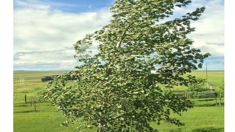 Kleiner Baum bewegt sich im Wind