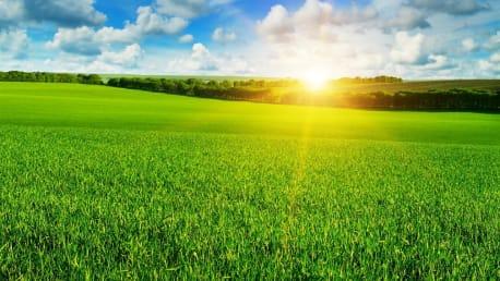 Im Frühling muss er vom Landwirt gut gepflegt werden, damit er wachsen und gedeihen kann.
