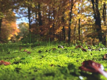 Der weiche Moosboden im Wald