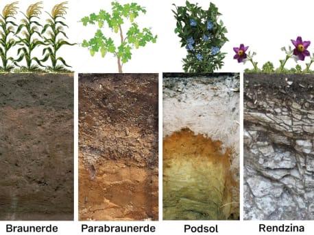 Bodentypen