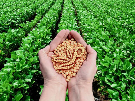 Hände halten Hülsenfrüchte in der Form des Planterra Logos