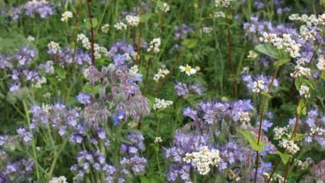 Paradies für Bienen, Hummeln und Insekten