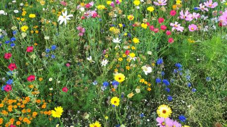 Nach der Rezeptur der  artenreichen Veitshöchheimer Sommerblumenmischungen