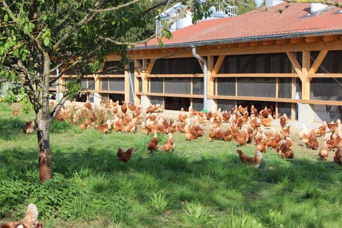 Wintergarten mit Hühnerauslauf