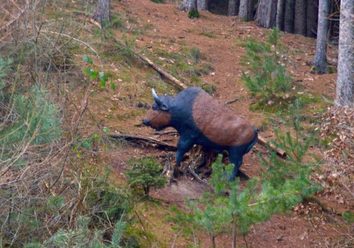 Bogenparcours mit Büffel