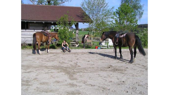 Pferd mit sitzender Frau