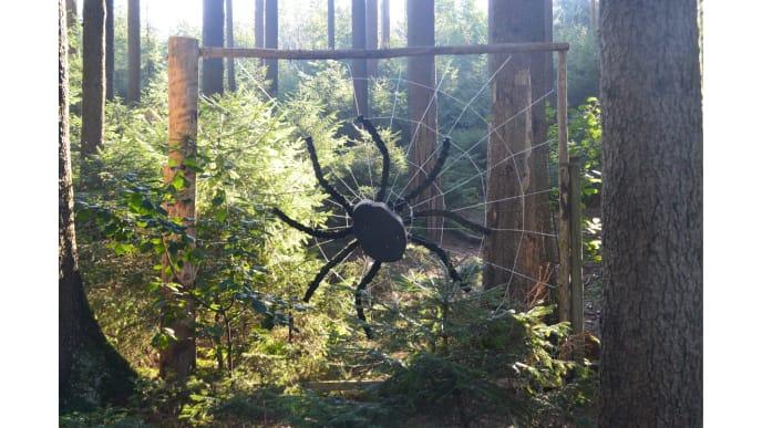 Spinnen im Wald