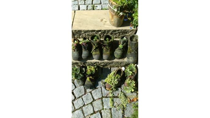 Pflanzen in Schuhe
