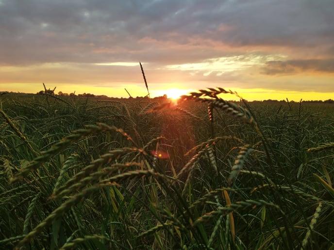 Sonnenuntergang Feld