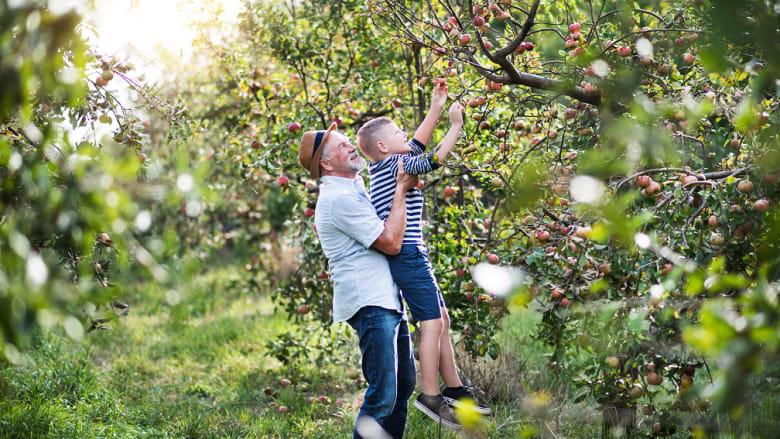 Äpfel pflücken