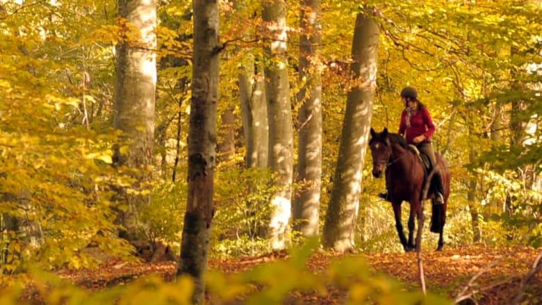 Herbstkampagne Pferd
