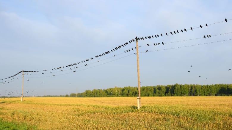 Effektive Vogelvergrämung