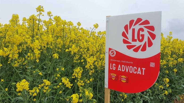ADVOCAT begeistert mit Top Ertrags- und Ölergebnissen