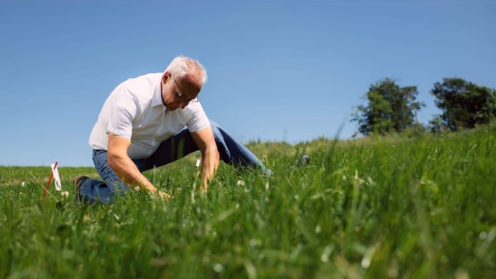 Grünlandnachsaat – wegen oder trotz Trockenheit unverzichtbar!