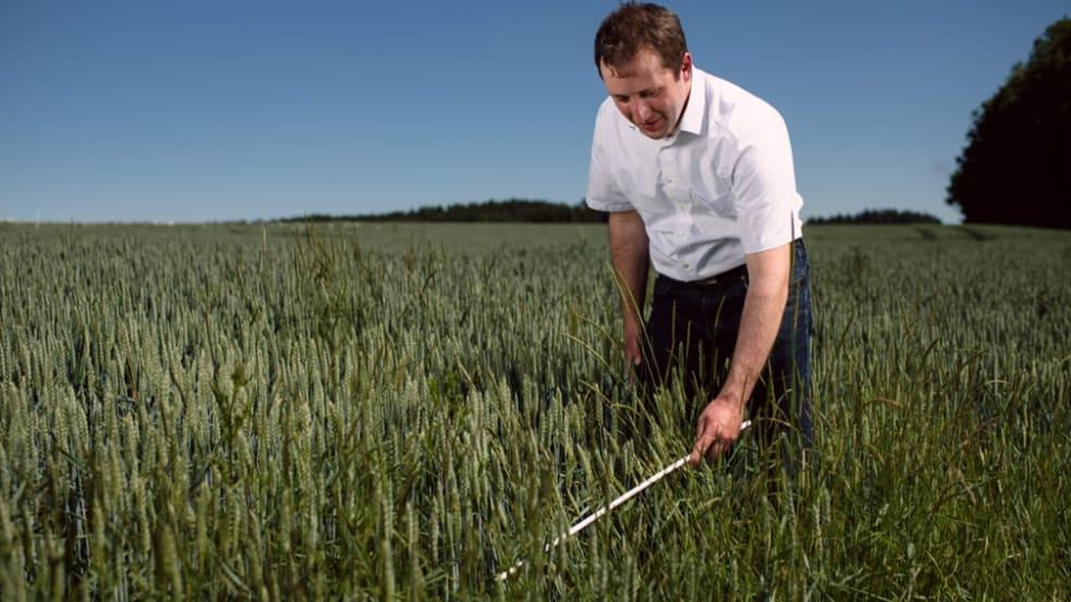 Den Ackerbau langfristig wirtschaftlich halten: Ungrasbekämpfung im Herbst