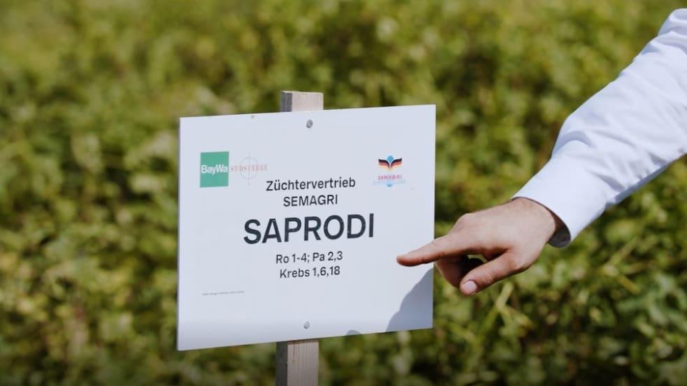 Saprodi