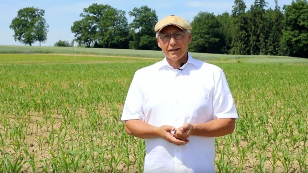 Untersaat im Mais
