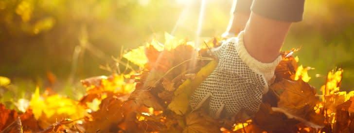 Gartenkalender: November