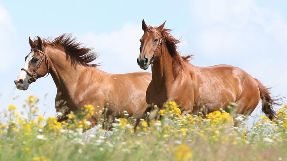 Öko-Futtermittel für die Pferdehaltung