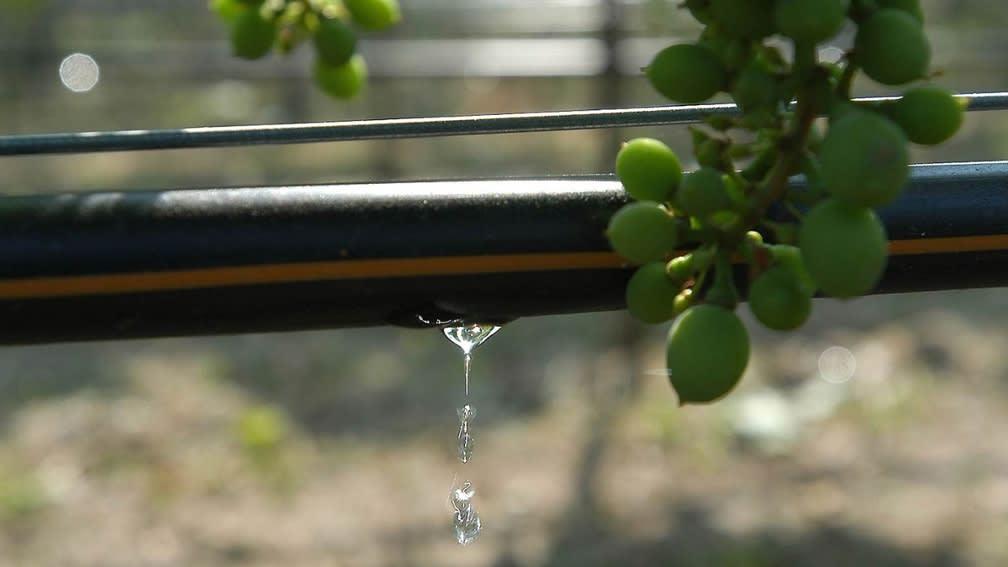 Bewässerung Weinbau