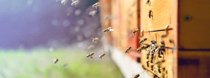 Bienen am Bienenstock
