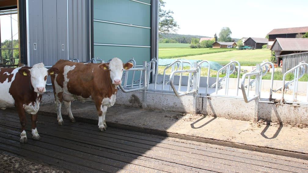 Erhöhte Fressplätze mit Trennbügel ermöglichen den Tieren eine ruhige Futteraufnahme