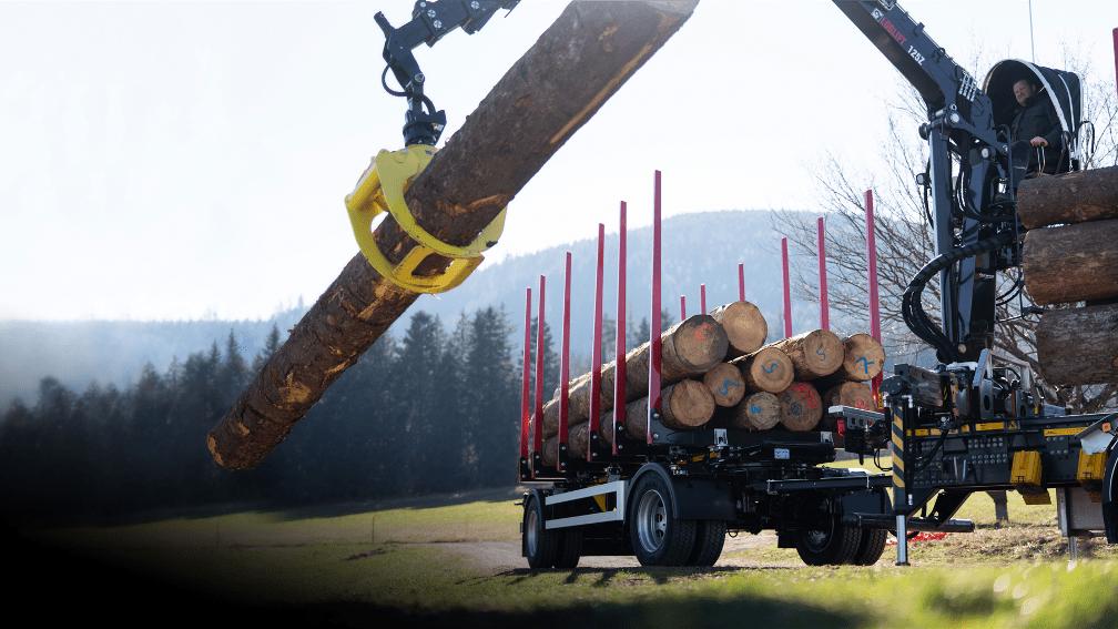 Baumstamm wird auf LKW geladen