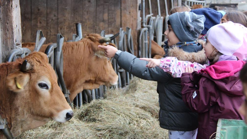 Kinder erleben Ackerbau und Viehzucht auf dem Obergrashof.