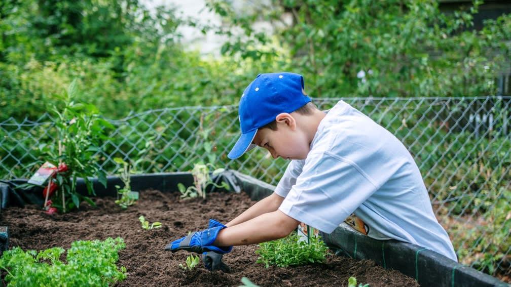 Schulgarten pflanzen mit der BayWa Stiftung