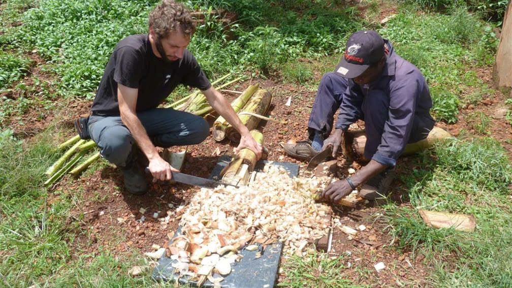 Bananenstamm wird in die Biogasanlage gegeben und erzeugt damit saubere Kochenergie.