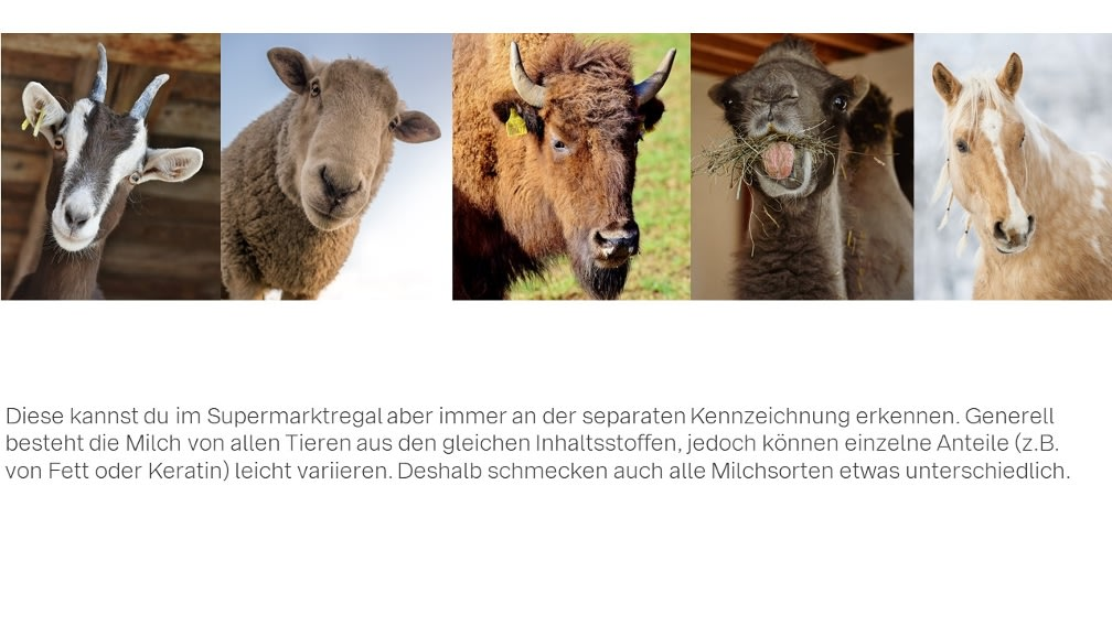 Bilder von Ziege, Schaf, Büffel, Pferd, Kamel