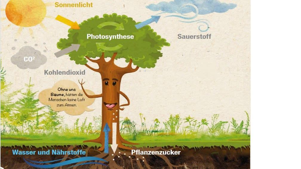 Der Baum als Energielieferant_Bild