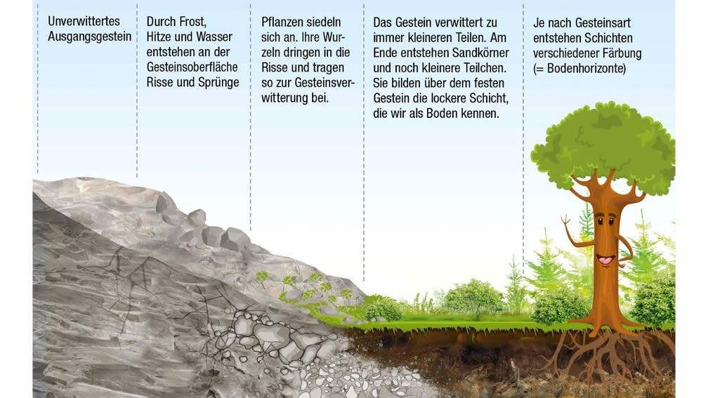 Die Entstehung des Bodens