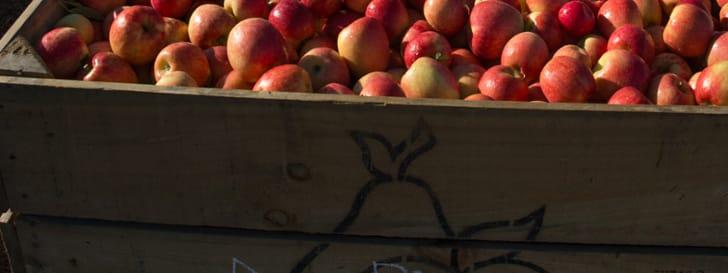 Our apple varieties