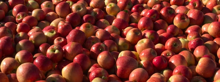 See our apple and pear varieties