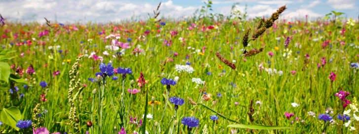 Farbenpracht mit Blühmischungen