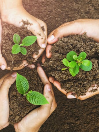 Picture shows three hands holding some soil with plants