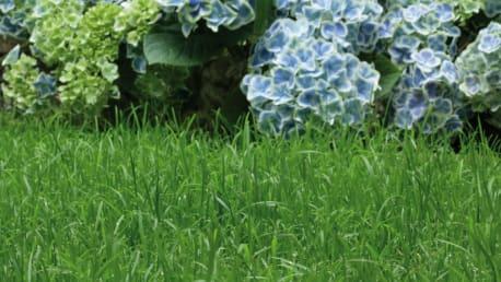 Dünger für Ihren Garten und Ihren Rasen