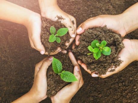 Drei Hände halten ein wenig Erde wie eine Schale. In der Erde sind kleine Pflanzen eingesetzt.