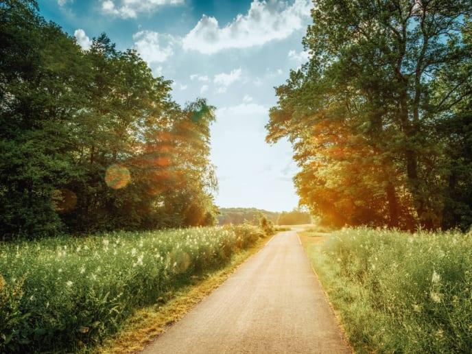 Waldweg Sonne
