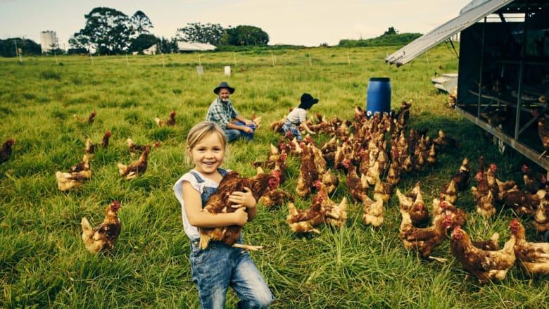 Aktion im Bereich Geflügelfutter
