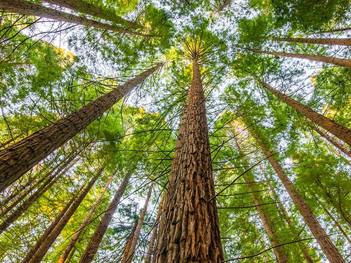 Bäume Wald