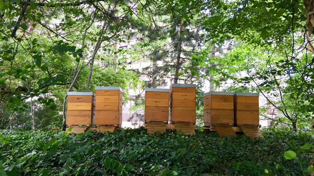 city honey in organic quality