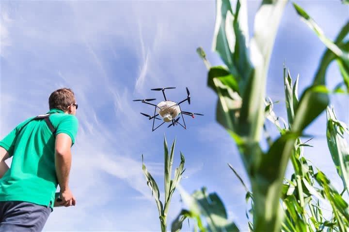 Schlupfwespen werden mit Drohnen ausgebracht, um Schäden durch den Maiszünsler zu verhindern. Mit Hilfe der Digitalisierung können vermehrt ökologische Alternativen im Pflanzenschutz vorangetrieben werden.