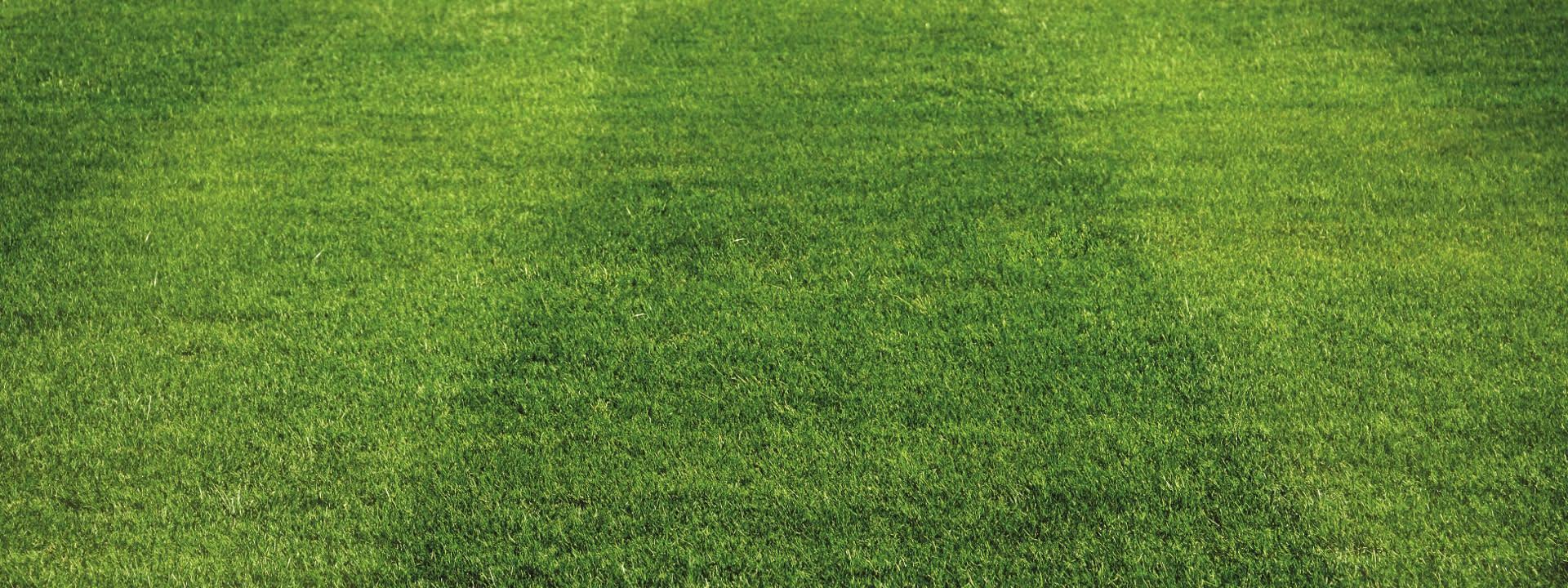 FAQ zum perfekten Rasen