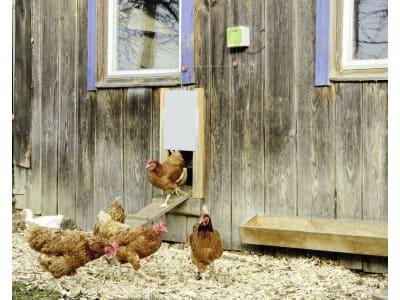 Kerbl Hühnertür inkl. Steuerung und Führungsschienen für Geflügelställe