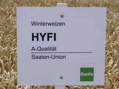 Winterweizen Saatgut Hyfi (A) Standard