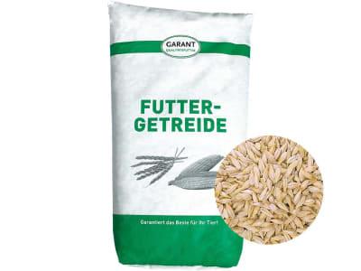 Gerste Ganzkorn ohne Gentechnik Futtergerste für Pferde, Hühner und Kleintiere 30 kg Sack