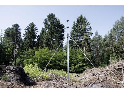 Schlitzfallenständer sternförmig, für drei Borkenkäferfallen