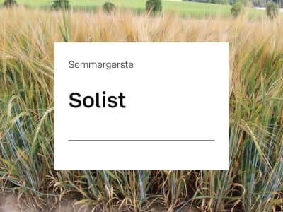 Sommergerste Solist